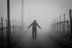 Hanging in the Fog