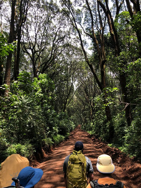 Umbwe route - fire road