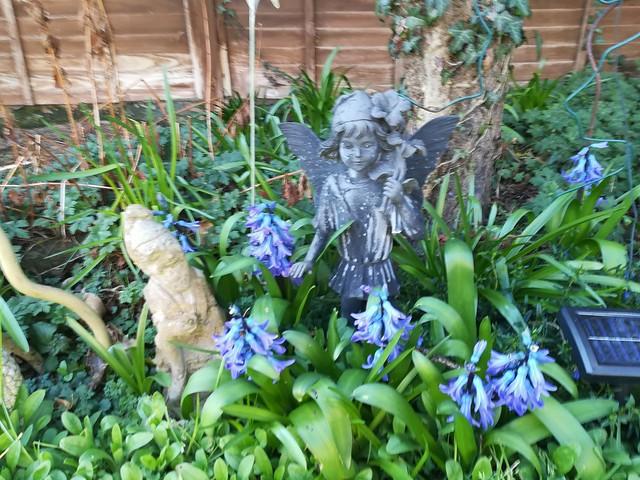 Hyacinths and friend....!!!!