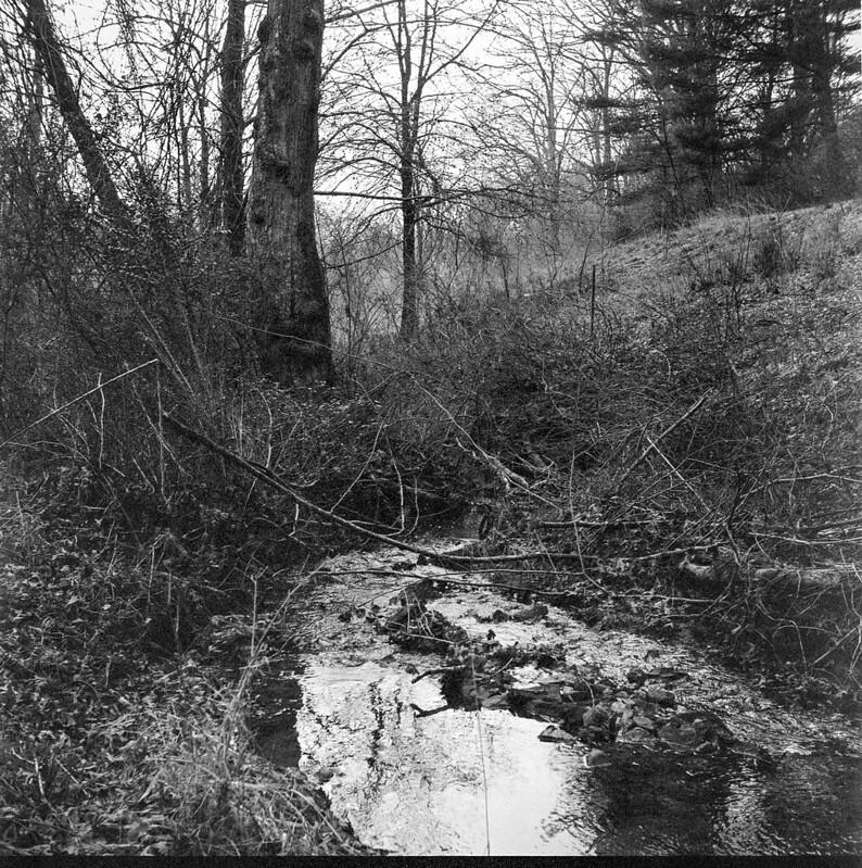 small stream, reflection, forest, Biltmore Estate, Asheville, NC, Ricoh Dia M, Arista.Edu 400, Ilford Ilfosol 3, 3.6.18