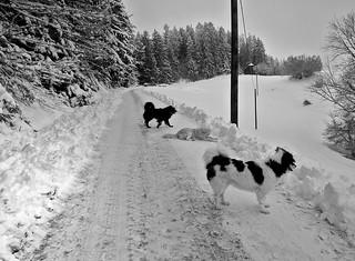 THREE FROSTDOGS (Philetta, her daughter Finja & neigbhours dog Blacky)