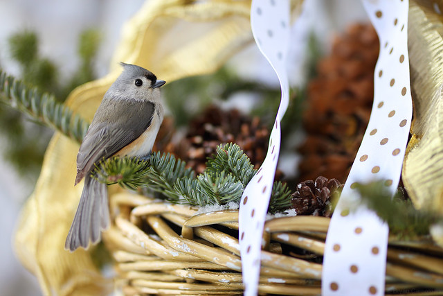 Tufted Titmouse in a Basket, Merry Christmas!!!
