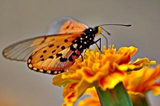 Butterfly | by noelcmn