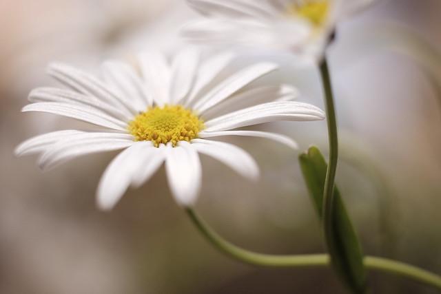 wait for spring calmly/春、偲ぶ