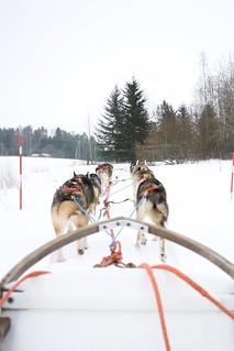 Husky Safari in Tampere   by helirontu