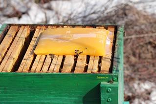 Albinele de la Kultiva   by MyBees.ro