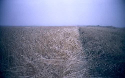 Norfolk Mist