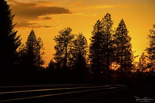 sunset dusk sun clouds gold yellow orange silhouette pine ponderosapine trees forest rail reflection railroad goldrun goldrunca placercounty goldcountry sierrafoothills foothills sierranevada northerncalifornia california