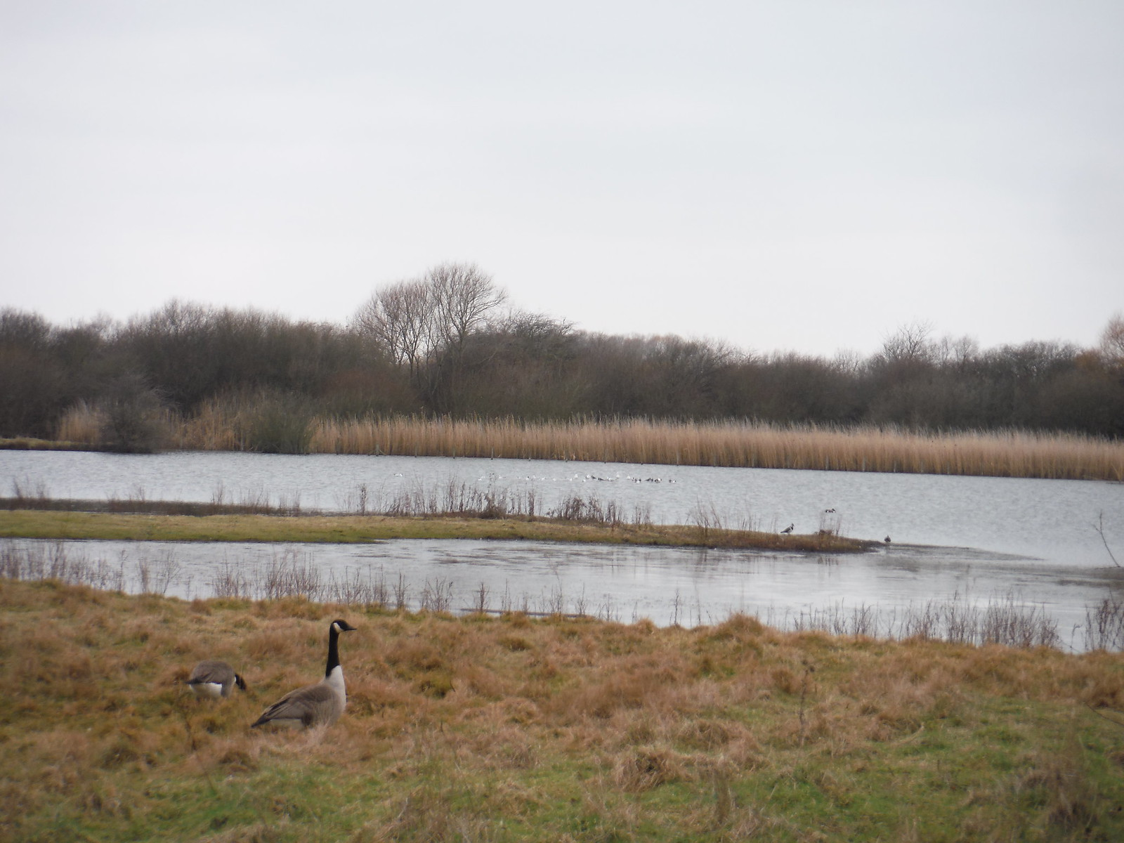 The Slack (Bird Sanctuary), The Chase Local Nature Reserve SWC Short Walk 33 - Dagenham Parks, Rivers and Ponds