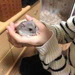 #Repost @shimathehamster ・・・ しっかり掴まるシマ🐹☺️❤️. . 朝から癒されて🙋♀️お仕事行ってきます✨. . Good morning mommy🐹… #hamster #hamstergram #hammy #cuteboy #ハムスター #ジャンガリアン #ブルーサファイア #ハムスター好きな人とつながりたい #もふもふ #ふわもこ部 #アニマル写真部 #かわいい#癒