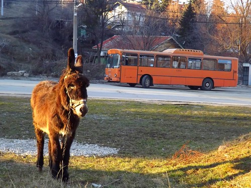Donkey and a Bus | by Emperor (GTSofia.info)