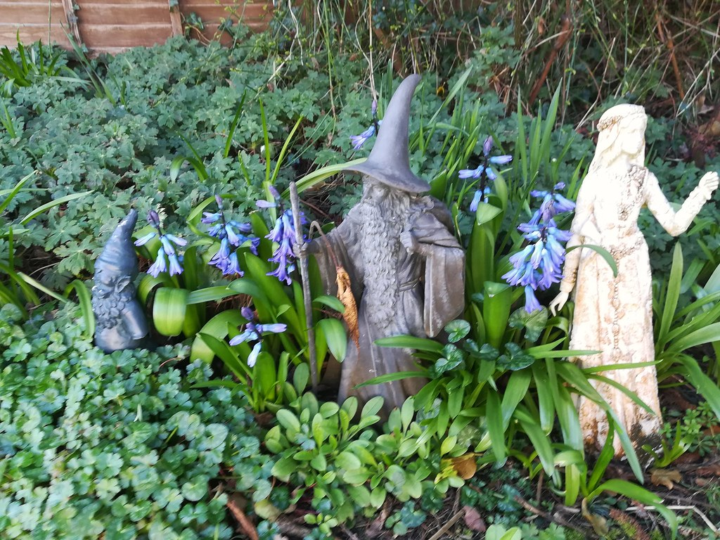 Hyacinths coming up around Merlin.