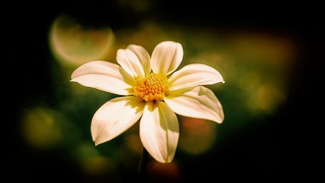 Flower - 4683