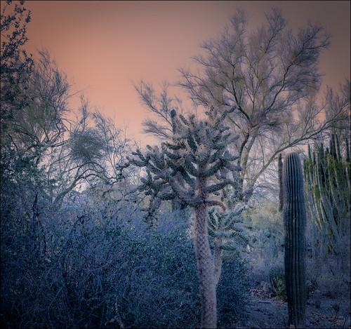 cactus palmsprings