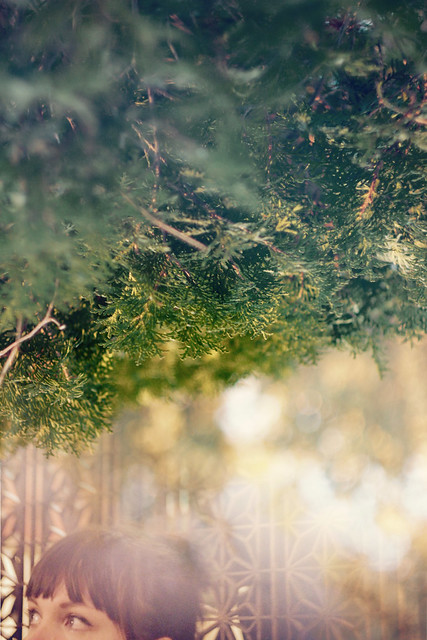 kelly trees blend