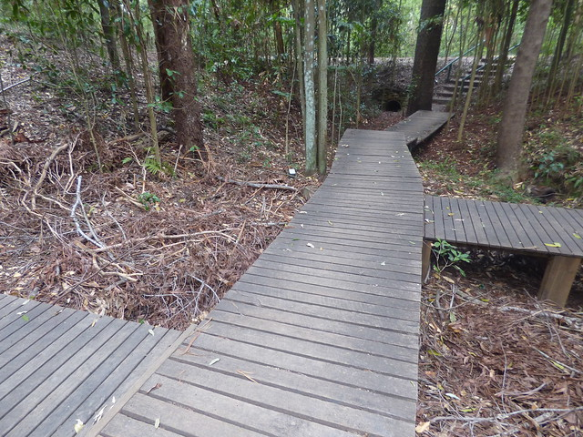 Cumberland Forest, West Pennant Hills, NSW, March 2018
