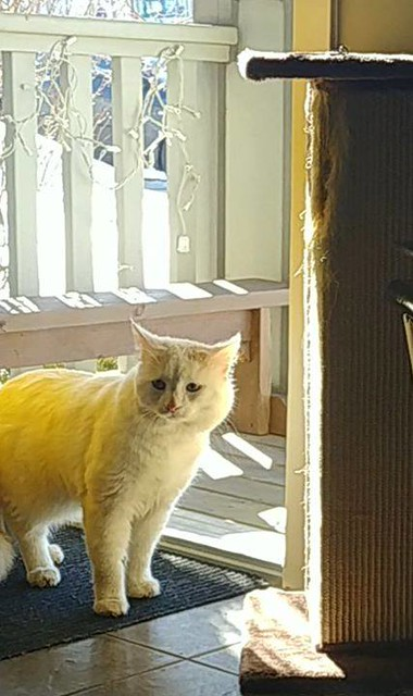SIGHTING - white cat with an orange tail in #Panorama Hills NW, Please RT, share. http://bit.ly/2FOwg6h YYC Pet Recovery shared Kate Uy's post. A white cat with an orange tail has found its way on our porch this afternoon. It was very skittish around peop
