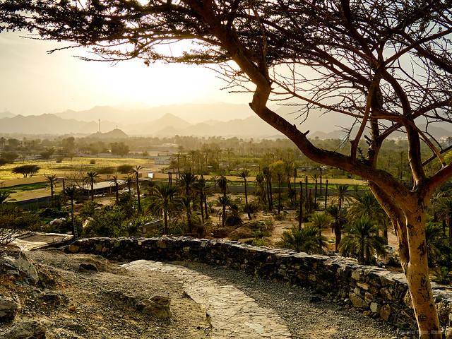 VAE, Oman 2018