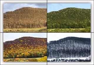 Four Seasons (2015/2016)
