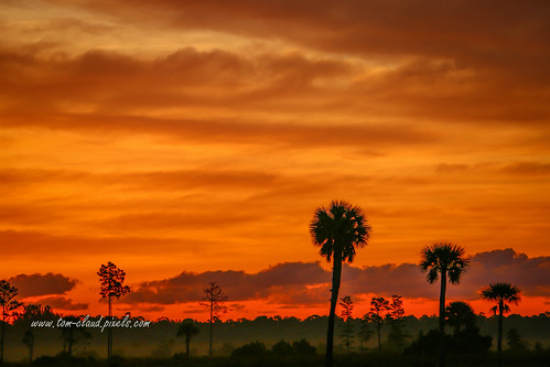sun sunrise weather clouds trees palm pine silhouette sky nature mothernature landscape pineglades naturalarea pinegladesnaturalarea jupiter florida usa outdoors outside