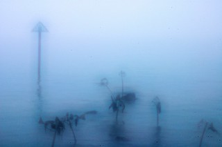 Misty fish