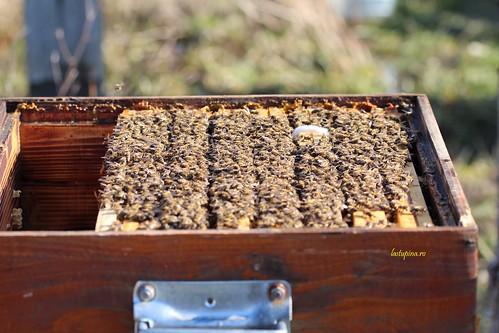 Albinele de la Stupina.ro | by MyBees.ro