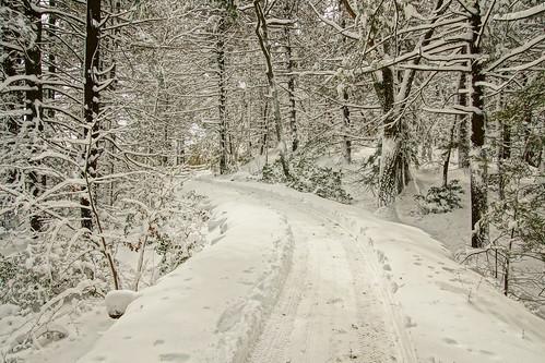 winterstorm snow noreaster winter2018 winter 2018 sonyslta65v eaglecliff mohonkmountainhouse mohonk shawangunkmountains shawangunkridge shawangunk shawangunks gunks ulstercountynewyork trees dicot forest northeast newyorkstate hudsonvalley hudsonrivervalley hdr coniferous deciduous