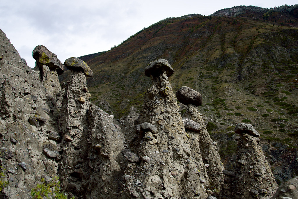 Stone mushrooms.