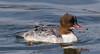 Harle bièvre - Mergus merganser - Common Merganser : Michel NOËL © 2018-2357.jpg by Michel NOEL 1,4 M + views .Thanks to visits