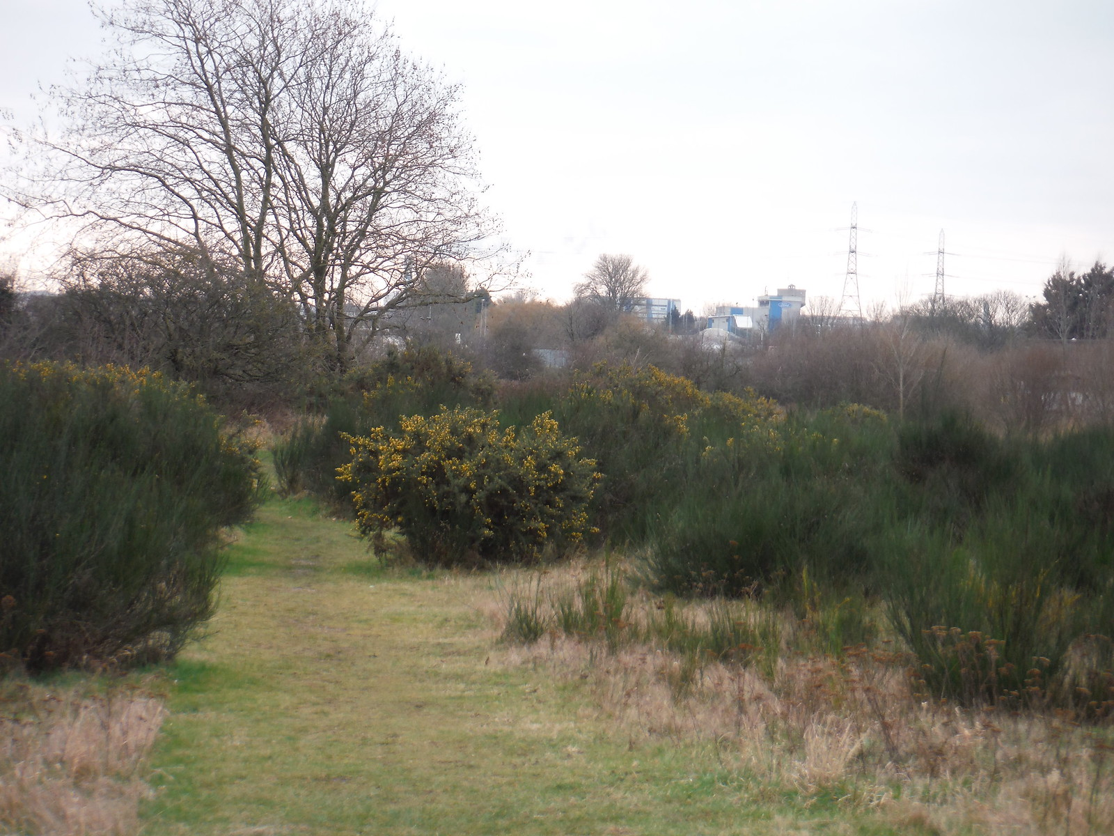 Grassy Path through Gorse Bushes, Beam Parklands SWC Short Walk 33 - Dagenham Parks, Rivers and Ponds