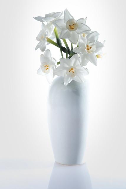 Minimalist Narcissus