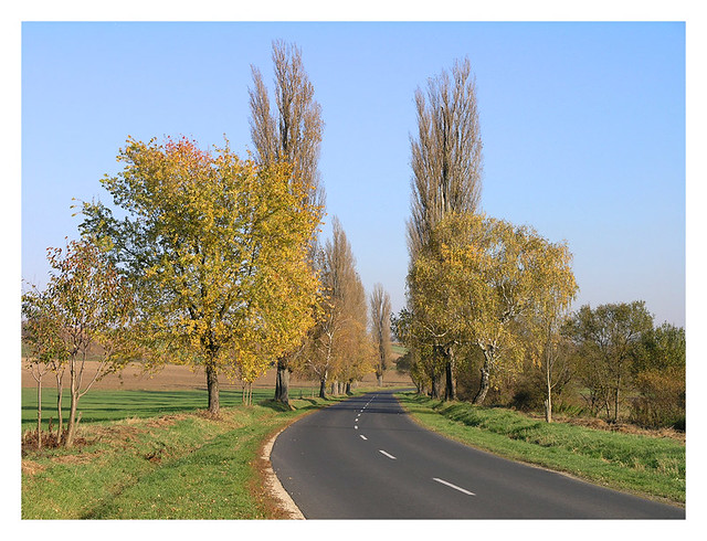 Fall road - on the way to Tab