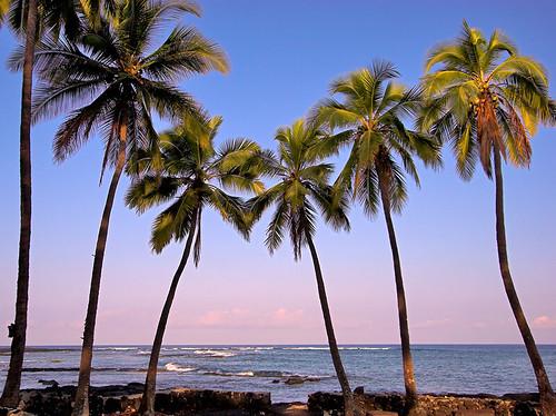 ocean beach sunrise palms hawaii kona 20870 keei