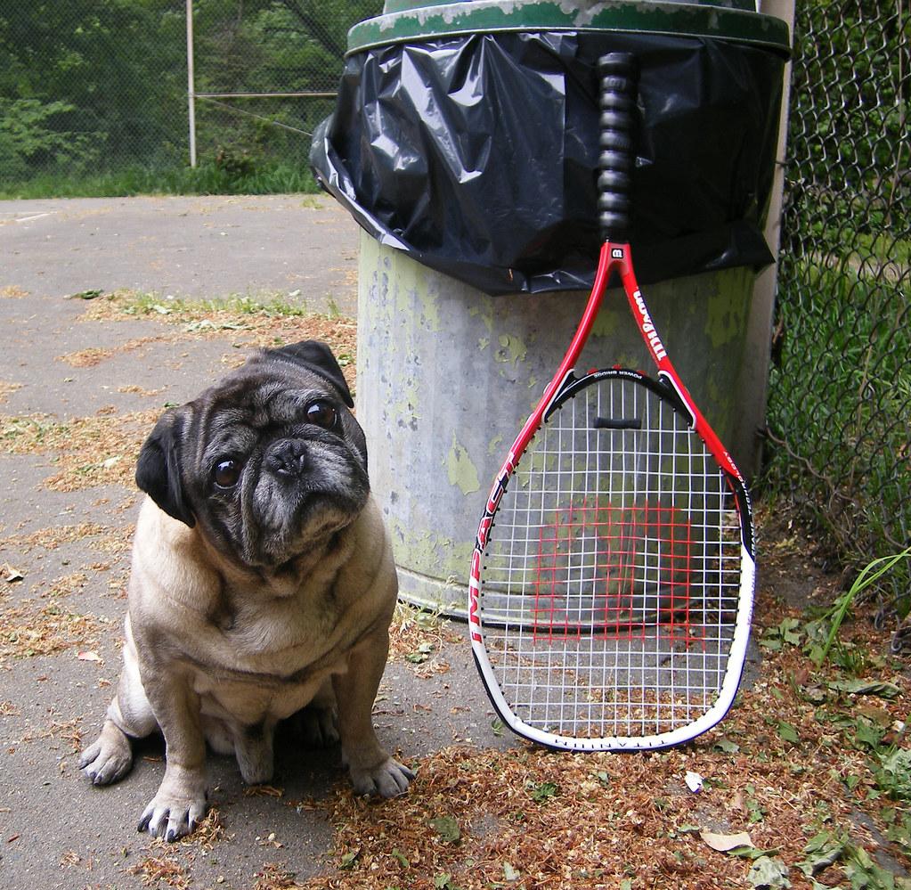 Pug With Tennis Raquet