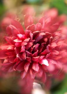 Flowering experiment