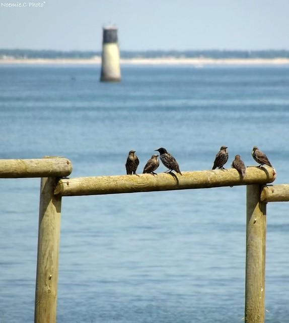 Les oiseaux au bord de l'eau