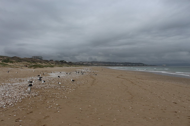 Seagulls and Seashells
