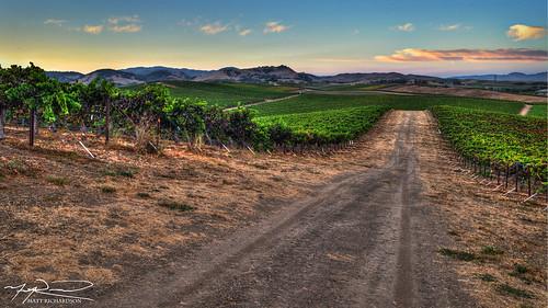 wine vineyards napa landscape hdr