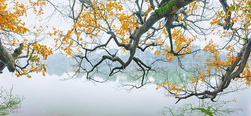 câylộcvừnghồgươm câylộcvừng9gốc mùalộcvừngláđỏ câylộcvừng hồgươm hoankiemlake goldenleavesfallseason trees outdoor