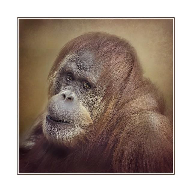 Primate's Gleam of Love