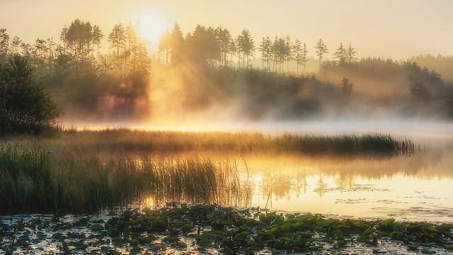 Sunlight meets mist