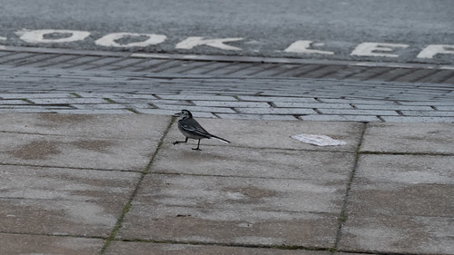 Look left (roadside wagtail)