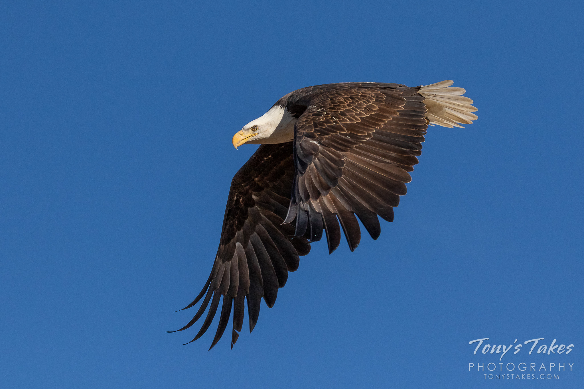 Bald Eagle makes an aggressive departure for Freedom Friday