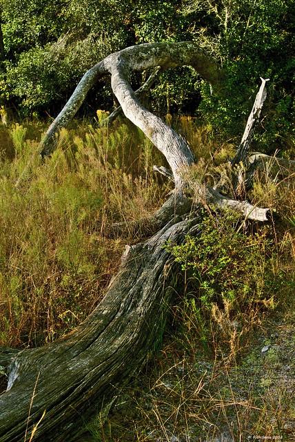 Sun Bleached Logs