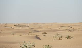 Dubai Desert Safari | by Ankur P