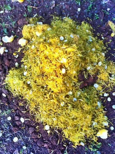 nigeria orangepeel ibadan fertilizer compose