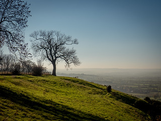 Tree with a View | by Paul Kaye