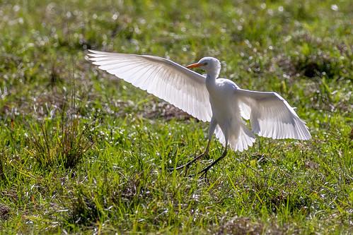 outdoor nature wildlife 7dm2 canon florida bird