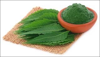 459825-neem | by healthpress.co