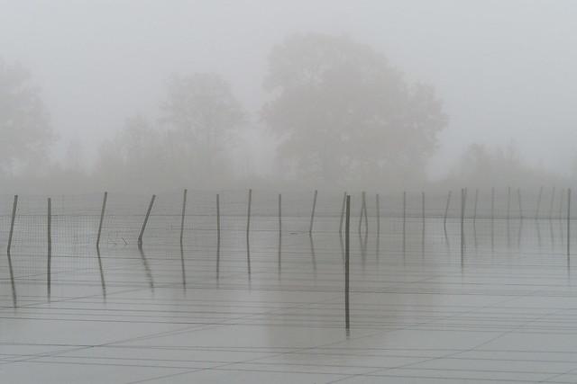 Viskweekvijver in de mist